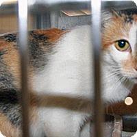 Adopt A Pet :: Marcy - Wildomar, CA
