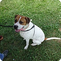 Beagle/Hound (Unknown Type) Mix Dog for adoption in Delaware, Ohio - Lucy