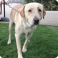 Adopt A Pet :: Riley - Temecula, CA