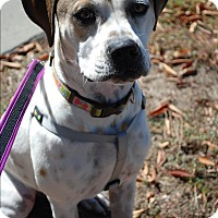 Adopt A Pet :: Lola - Richmond, VA