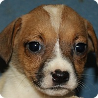 Adopt A Pet :: Heather - Colonial Heights, VA
