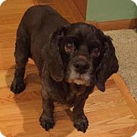 Adopt A Pet :: Chelsi - Princeton, MN