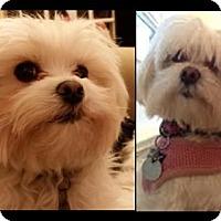 Adopt A Pet :: Lucy & Ellie - Battle Ground, WA