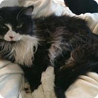 Adopt A Pet :: Sohalia - Grand Ledge, MI