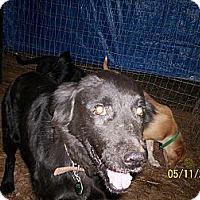 Adopt A Pet :: Jackie - Wedowee, AL