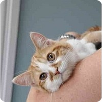 Adopt A Pet :: Jordan - Columbus, OH