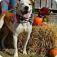 Adopt A Pet :: Butch - Woodlawn, TN