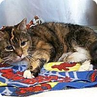 Adopt A Pet :: Basil - Dover, OH