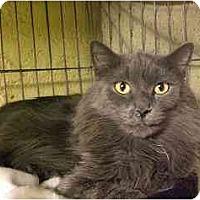 Adopt A Pet :: MaMa's Boy - Lombard, IL