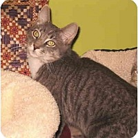Adopt A Pet :: Artemis - Colmar, PA