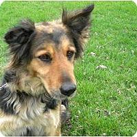 Adopt A Pet :: Zelda - Rigaud, QC
