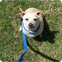 Adopt A Pet :: Toby - Kingwood, TX
