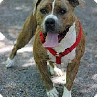 Adopt A Pet :: Hugo - Tinton Falls, NJ