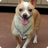 Adopt A Pet :: Dino - Tinton Falls, NJ