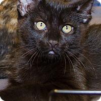 Adopt A Pet :: Marley - Irvine, CA