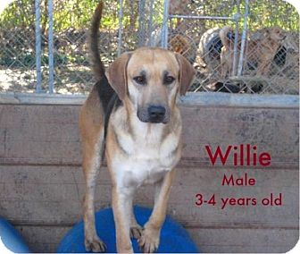 Hound (Unknown Type)/Labrador Retriever Mix Dog for adoption in Boaz, Alabama - Willie