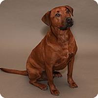 Adopt A Pet :: Captain - Marion, WI