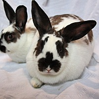 English Spot Mix for adoption in Alexandria, Virginia - Chloe & Maddie