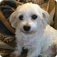 Adopt A Pet :: Char - Lakewood, CO