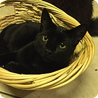Adopt A Pet :: Onyx - Chattanooga, TN