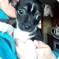 Adopt A Pet :: Fonzie - Joliet, IL