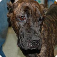 Adopt A Pet :: Justine - Brooklyn, NY