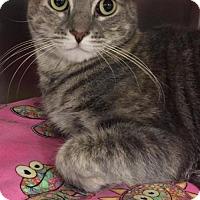Adopt A Pet :: Skooch - Trenton, NJ