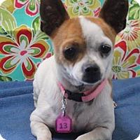 Adopt A Pet :: POKEY - Gustine, CA