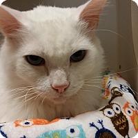 Adopt A Pet :: Iceman - Chula Vista, CA