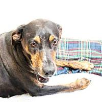 Adopt A Pet :: Rita - Tracy, CA