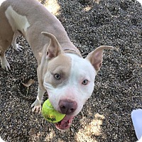 Adopt A Pet :: Gavin - Cleveland, OH