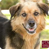Adopt A Pet :: Loni - Marina del Rey, CA
