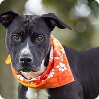 Adopt A Pet :: Buster - Flint, MI