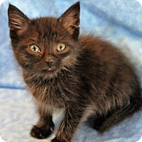 Adopt A Pet :: Hayden - Greensboro, NC