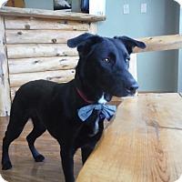 Adopt A Pet :: Milo - Colorado Springs, CO