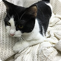 Adopt A Pet :: Frisco - Paducah, KY