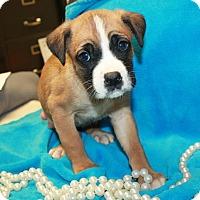 Adopt A Pet :: Heavan - available 1/21 - Sparta, NJ