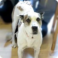 Adopt A Pet :: Nina - Marina del Rey, CA