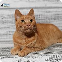 Adopt A Pet :: Citrus - Columbia, IL