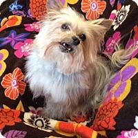 Adopt A Pet :: HAIKU - Oakland, CA