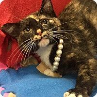 Adopt A Pet :: Machara - Jackson, TN