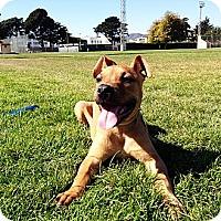Adopt A Pet :: Teddy Boy - San Francisco, CA