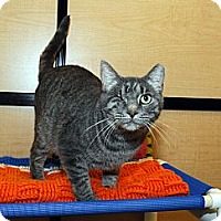 Adopt A Pet :: Belle - Farmingdale, NY