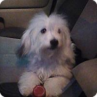Adopt A Pet :: Einstein - Wytheville, VA