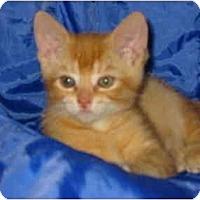 Adopt A Pet :: Fidget - Syracuse, NY