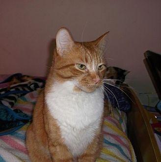 Cat Adoption Mississauga