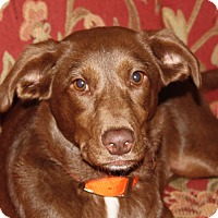 Adopt A Pet :: Sugar - in Maine - kennebunkport, ME