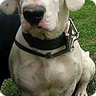Adopt A Pet :: Booker