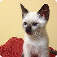 Adopt A Pet :: Fresco - Island Park, NY
