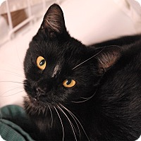 Adopt A Pet :: Lana - Winchendon, MA